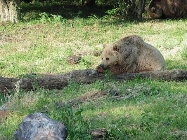 ZSL Whipsnade Zoo - Event - Sunset Safari
