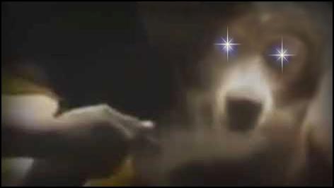 Cachorro Mil Grau
