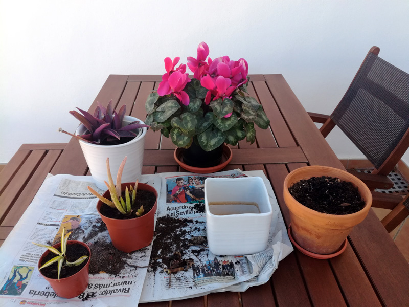 Travaso di piante