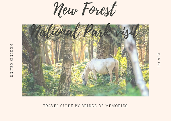 Visiting New Forest Park National Park