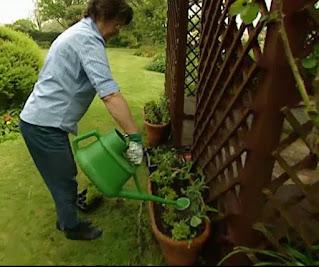 Liz watering