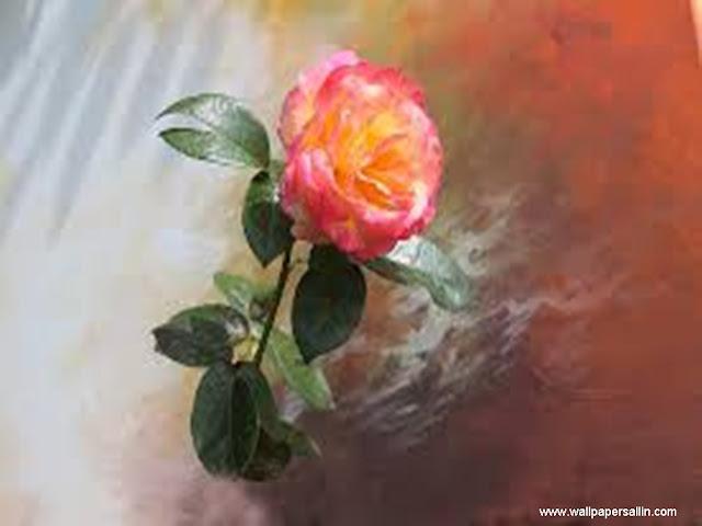 Rose  Flower Wallpaper -6