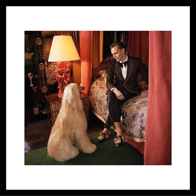 tom hiddleston, gucci, campaign, fashion, alessandro michele