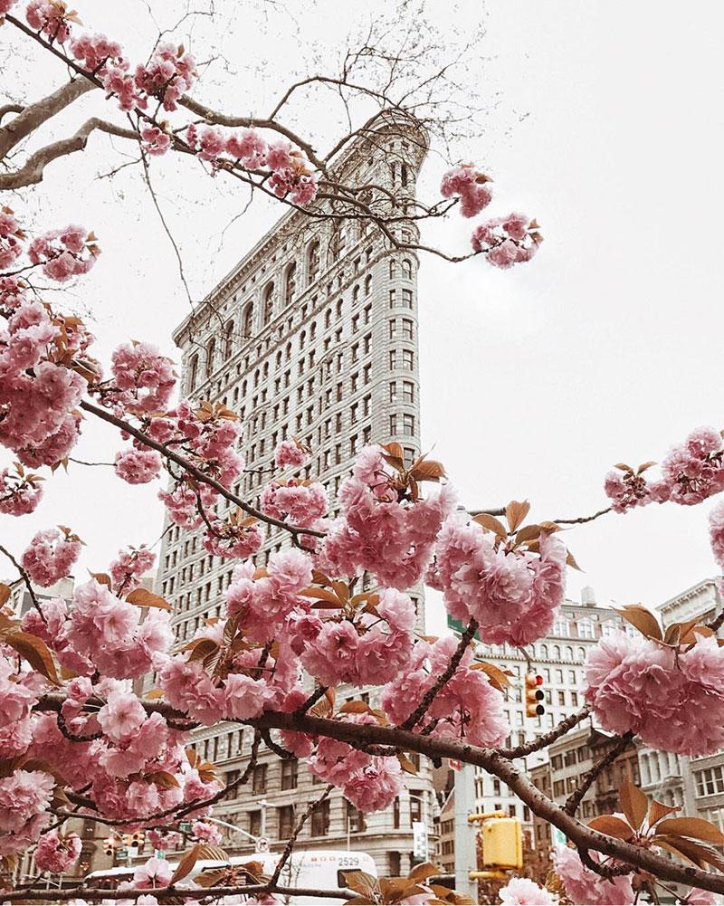 Spring Pink Blooms