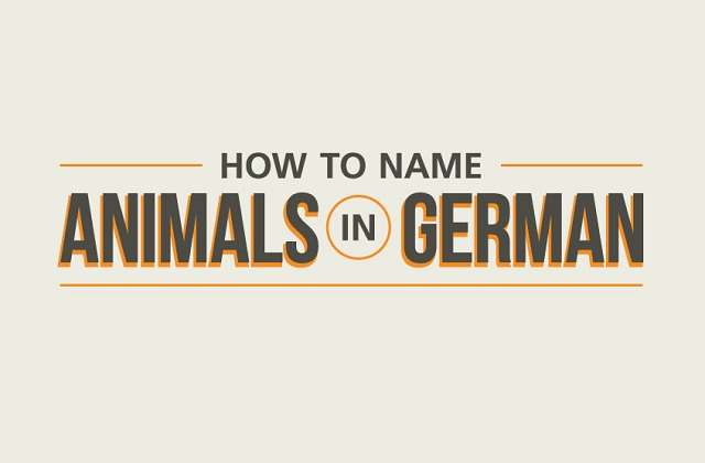 Image: How to Name Animals in German #infographic