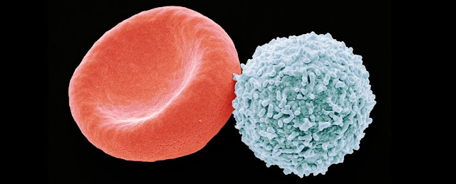 Autoimmune Experiments Switch Immune Cells From Attacking The Body to Protecting It
