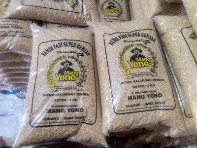 Benih padi yang dibeli MANFAAT TANI Subang, Jabar. (Sebelum packing karung ).