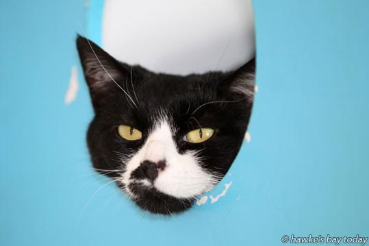 Adolfina - Adopt a Pet at Hastings and Districts SPCA, Hastings. photograph