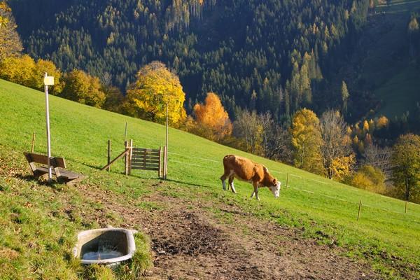 autriche salzbugerland zell am see randonnée mitterberg