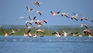 chilka-lake-best-tourist-places-in-odisha