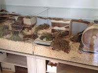 Cara Sederhana dan Mudah Membuat Kandang Hamster di Rumah