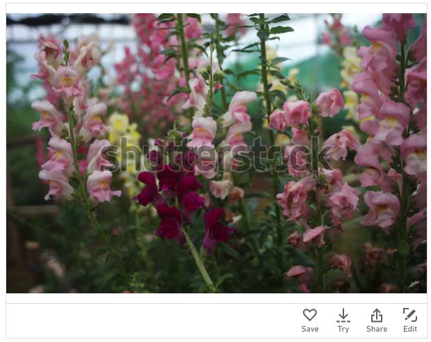 Foto Bunga yang laku di Shutterstock