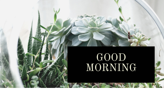 Good Morning- The Flower Boy