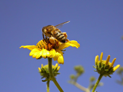 Ξέρετε ότι η μέλισσα. . .