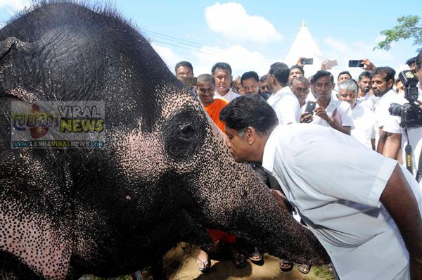 elephant kiss sajith premadasa