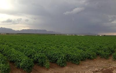 Cara Pilih Jenis Tanah untuk Menanam Cabe agar Subur