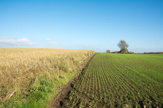 Agricultura de Secano