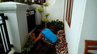 Tukang Taman Gading Serpong,Jasa Pembuat Taman di Gading Serpong,Jasa Renovasi Taman di Gading Serpong