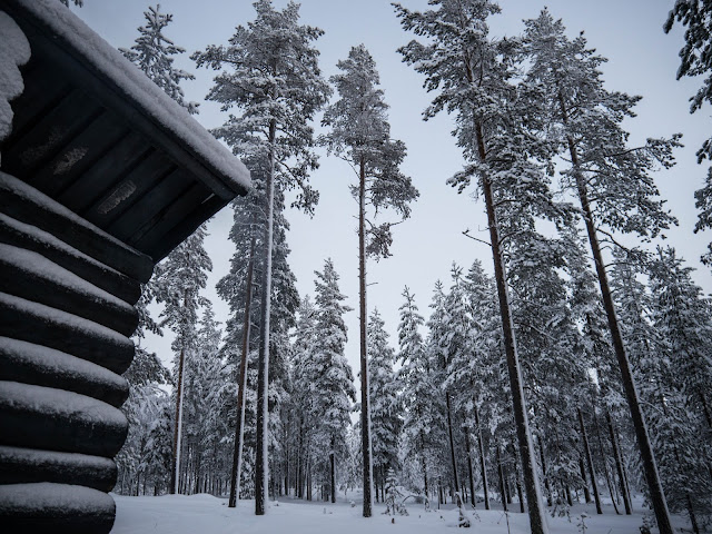 Wilderness Cabin - Taiga Husky Tour