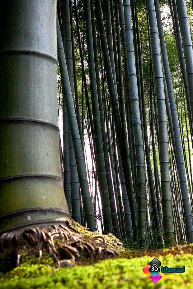 3d Wallpaper Hd Iphone Wallpaper Hd Bamboo