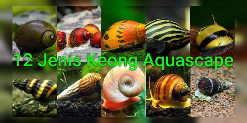 Jenis Keong Hias dan Hama di Aquascape Air Tawar