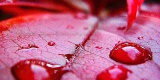 7 macam darah istihadoh yang wajib diketahui wanita