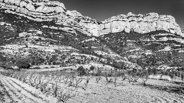 vinya scala dei montsant