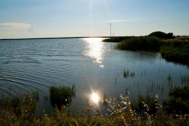 acqua, mare, sole, erba, riflesso, cielo,