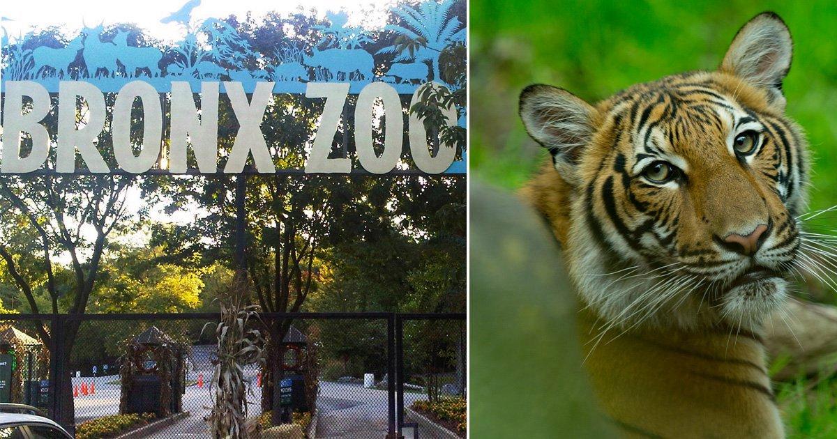 Nadia, Bronx Zoo