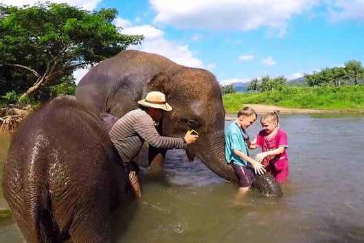 The Attraction of Elephant Bathing Show in Thailand