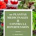 10 Plantas medicinales contra la hipertensión