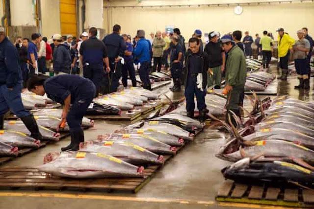 سوق السمك في اليابان