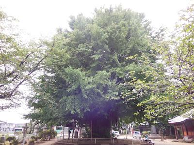 千葉寺大銀杏