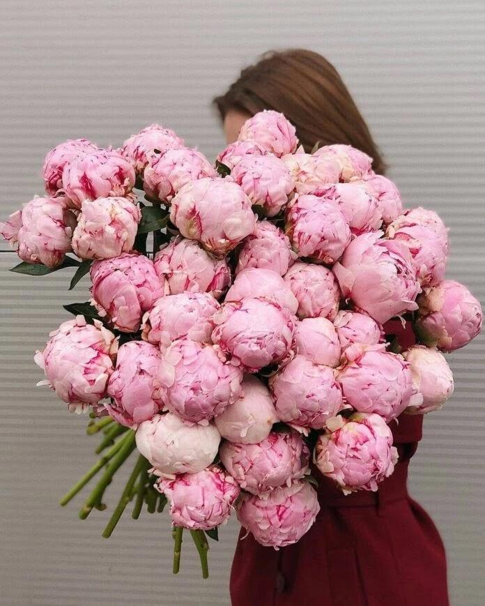 biljka_božur_cvijet