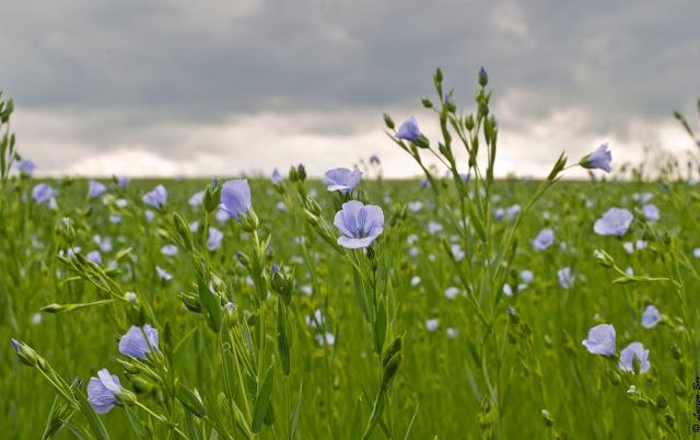avis du lin, un vent de raffinement alcante, blog bougie, blog beauté, blog parfum