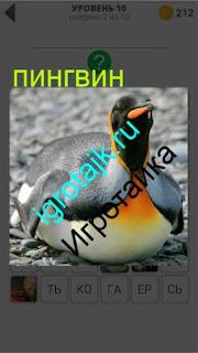 на земле лежит обычный пингвин 10 уровень 400 плюс слов 2