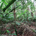 Compostagem, um ciclo natural de ciclagem de nutrientes na natureza