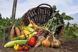Organik Tarım bölümü nedir