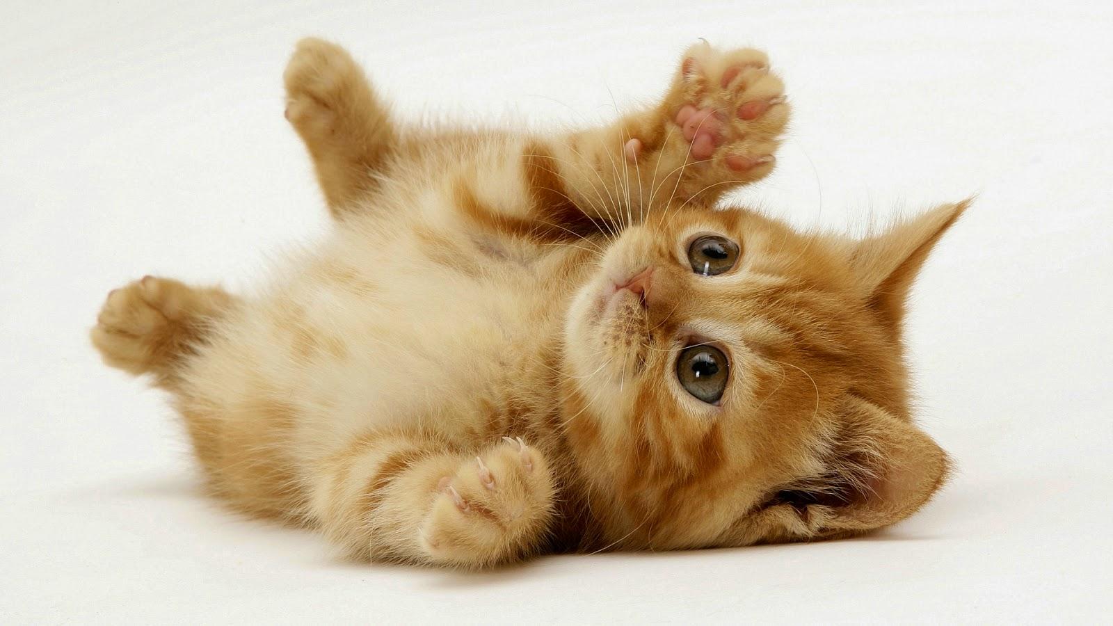 Rüyada Yavru Kedi Görmek