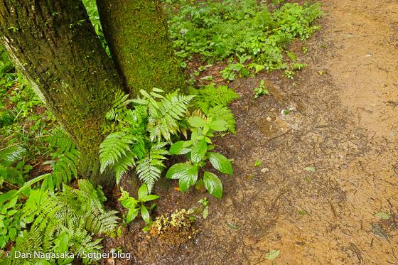 雨に濡れた葉や苔