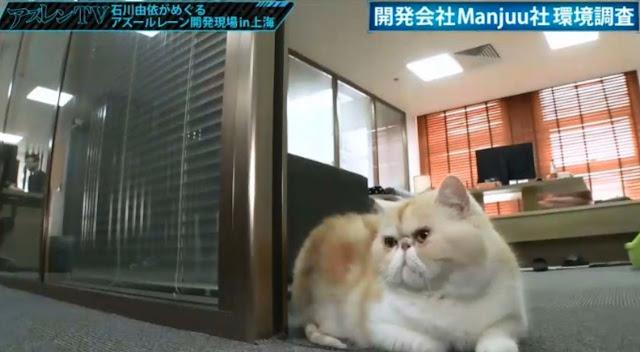 Netizen Kaget, Wanita Cantik Ini Ternyata Seorang Presiden, di Kantornya Ada Kucing!