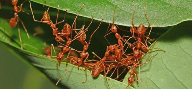 Dosa Membunuh Binatang Kecil Meski Tanpa Sengaja Seperti Semut dan Nyamuk