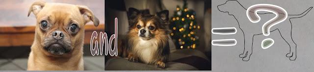 Hybridization of dogs