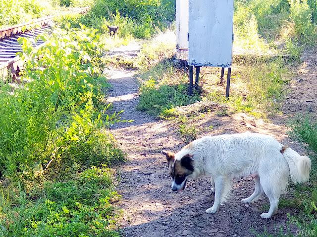 Каменнобродский район в Луганске