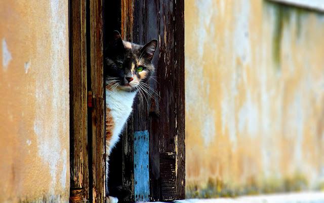 Kat kijkt om het hoekje