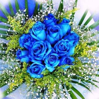 Gambar Bunga Mawar Biru Paling Cantik_Blue Roses Flower 200013