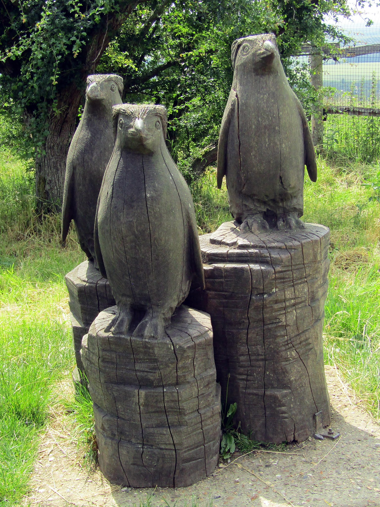 A photo of wooden rockhopper penguin statues at Whipsnade Zoo.