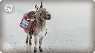 Seeking Wisdom? Now You Can Wish Upon GE's Adorable Little Invention Donkey