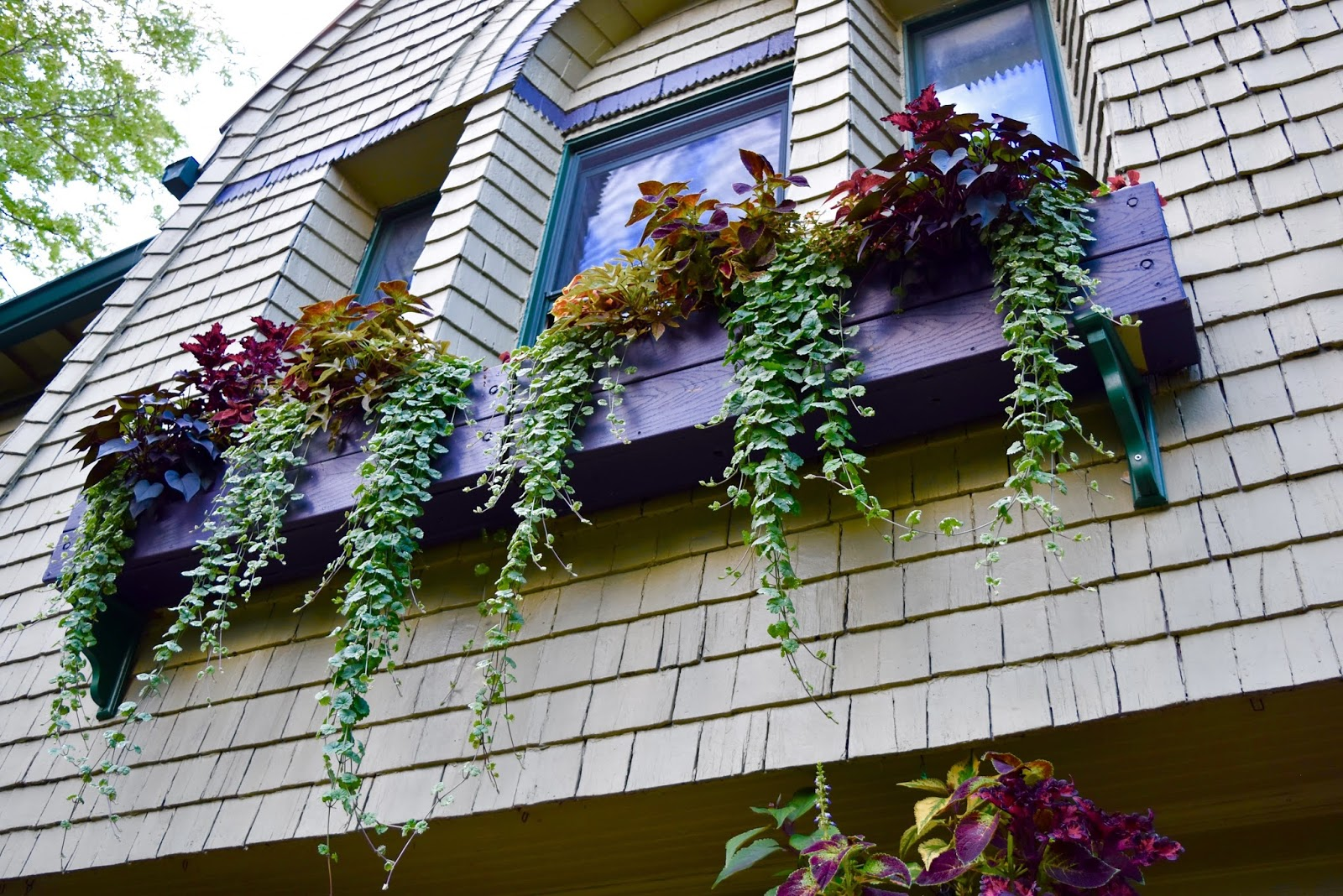 Climbing vines for walls - This Year S Window Boxes And Cone Baskets Wall Hanging Grate Climbing Vines Pots Planters And Vertical Succulent Gardens Came Out Great