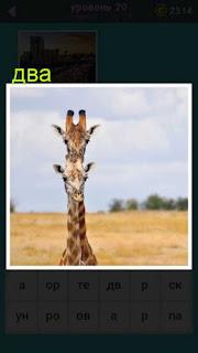 два жирафа друг на друге обе головы видны 667 слов 20 уровень
